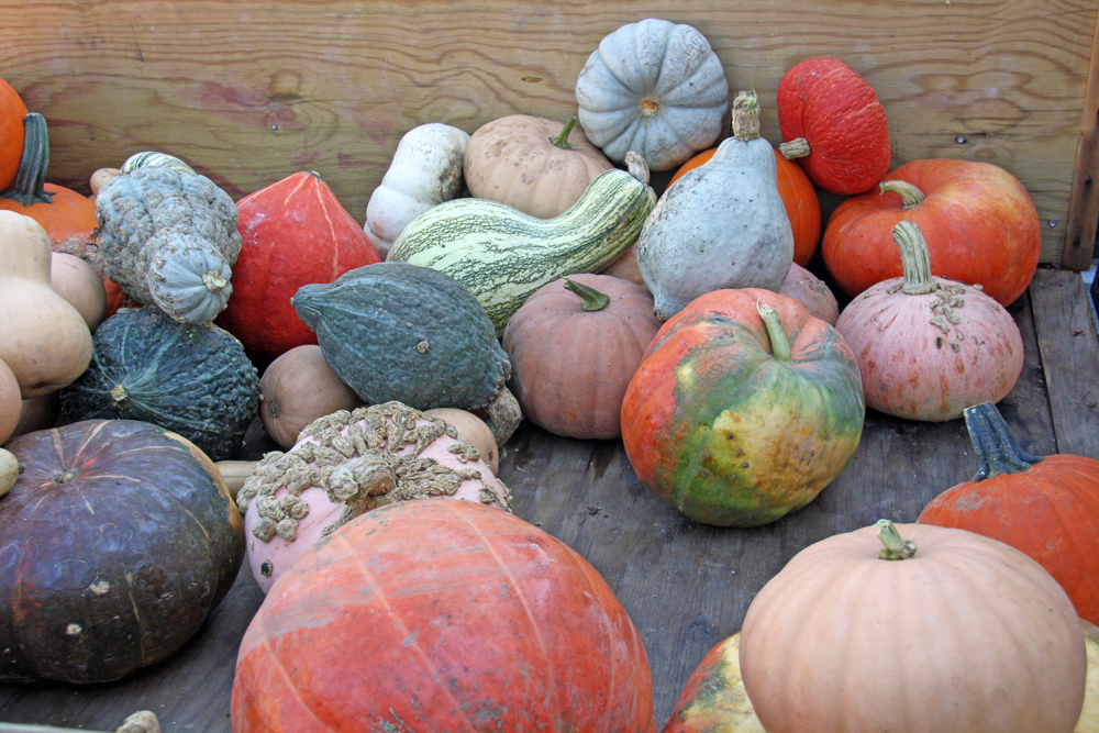 How to Find Unusual Pumpkins | redleafstyle.com