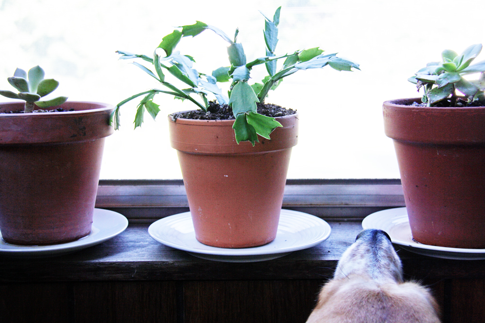Thrift Store Plant Saucers | redleafstyle.com