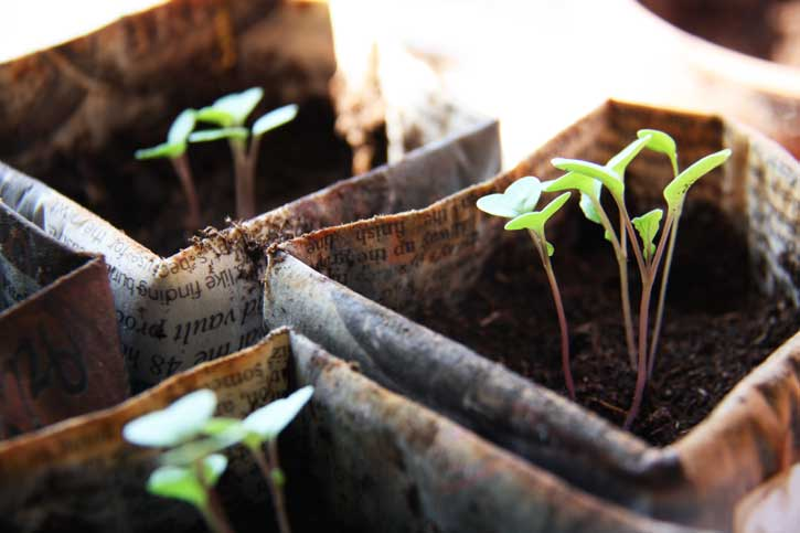 How to start seeds in newspaper pots | redleafstyle.com