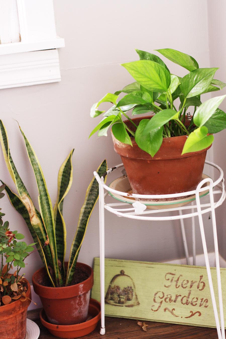 plants_corner