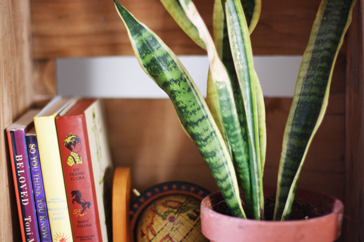 plant_colorful_books