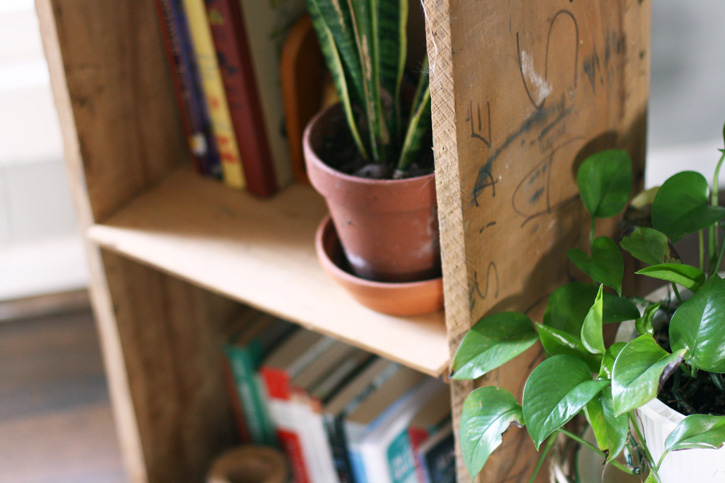 pot_plant_shelf