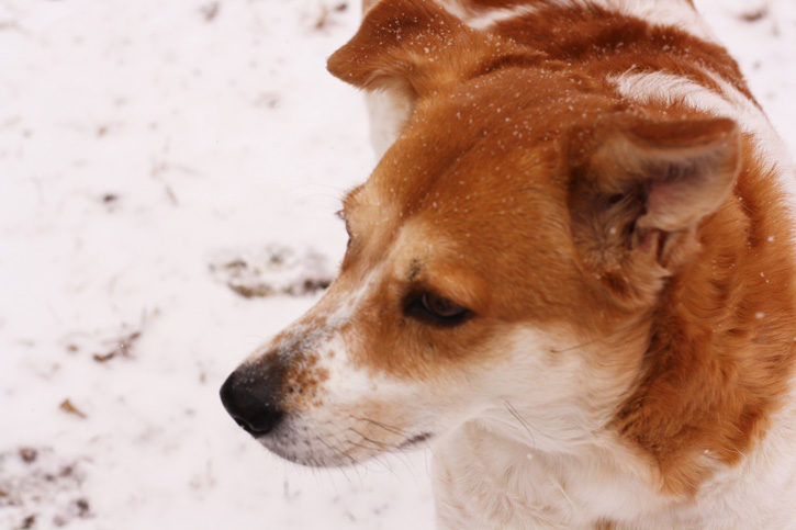 snow_dog_2015_web